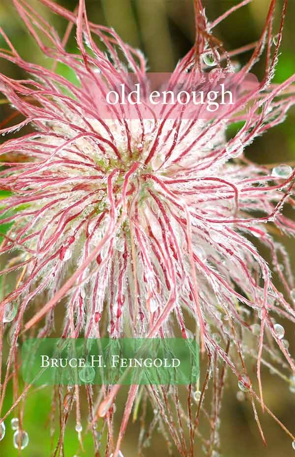 Old Enough, Haiku By Bruce H. Feingold